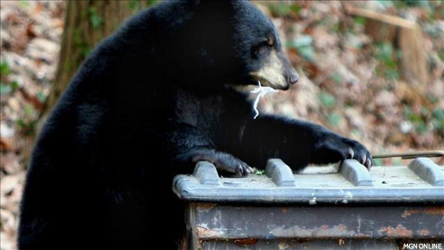 Black Bear_143622