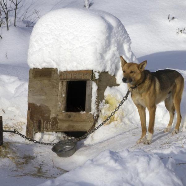Dog tethering_282903