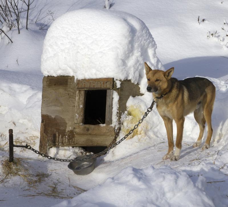 dog tethering_281253