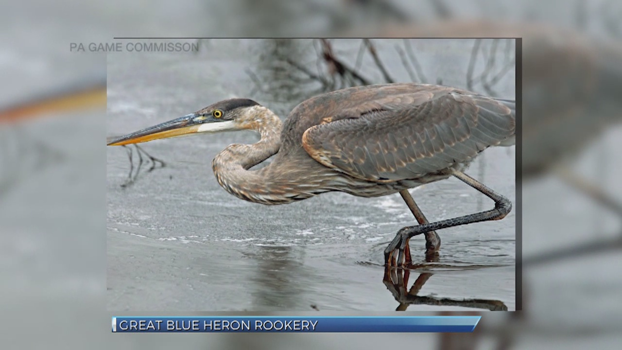 Great Blue Heron Jobs
