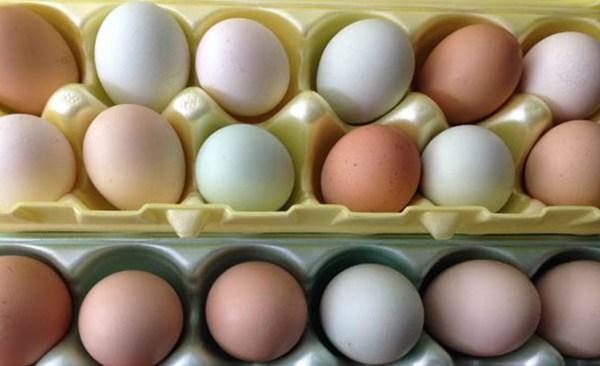 eggs_311862