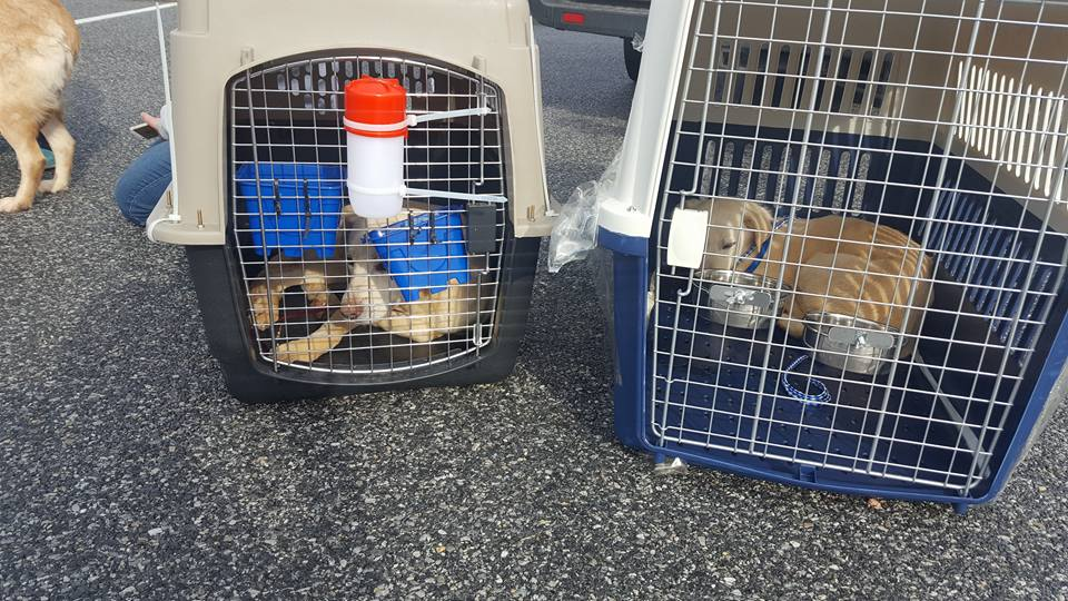 dogs-rescued-1-12_451024