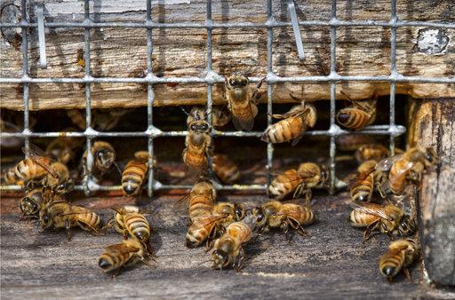 Bees Better_537212