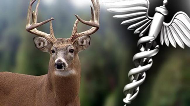deer_cwd_482539
