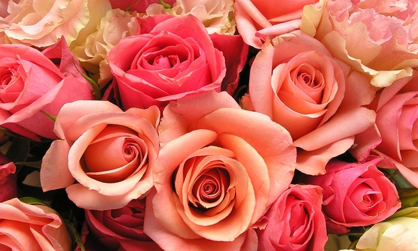 roses-flowers-valentines-day_1517879321399_340223_ver1-0_33247436_ver1-0_640_360_696981