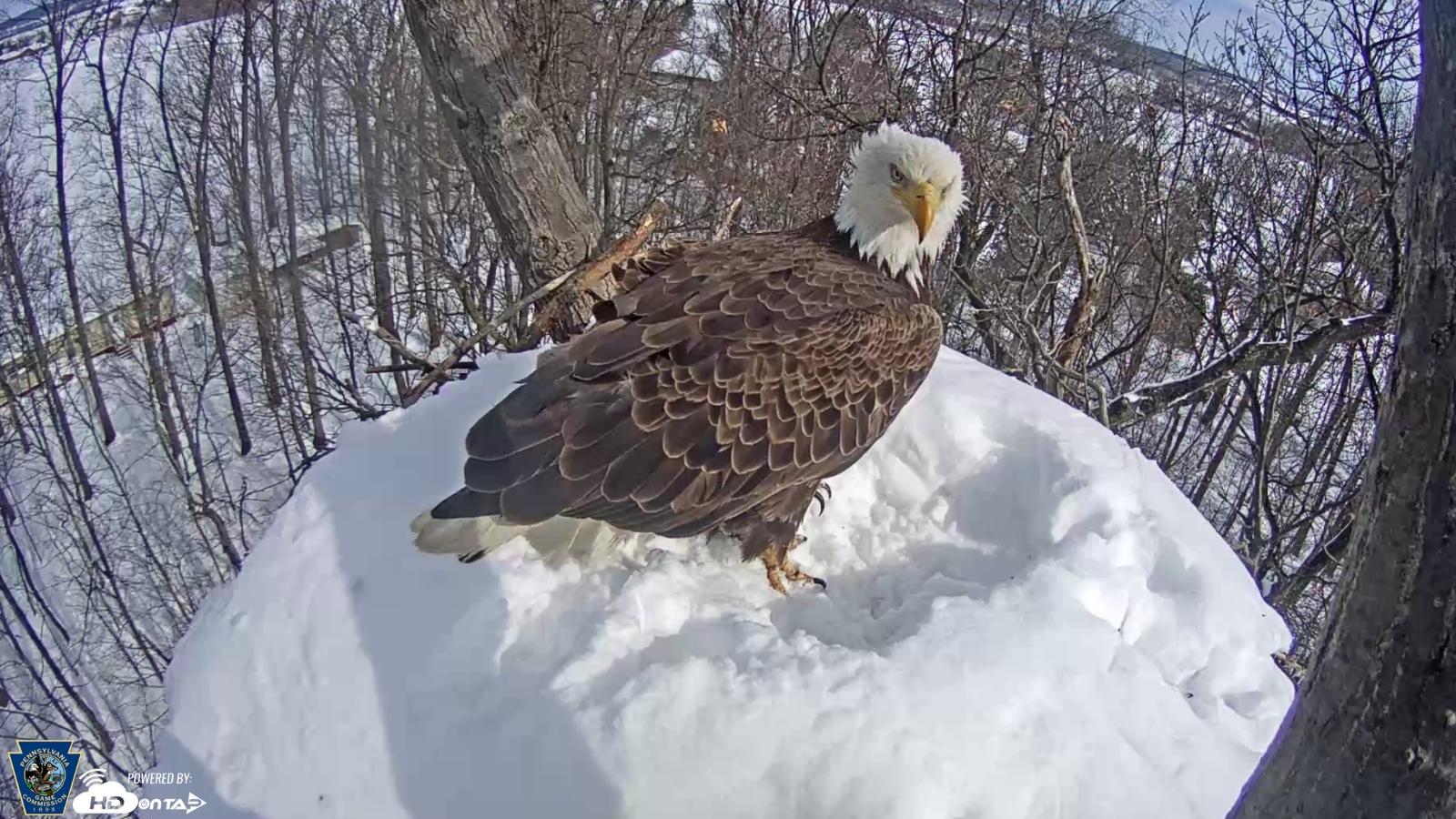eagle_snow_7_03222018_1521736413583.jpg