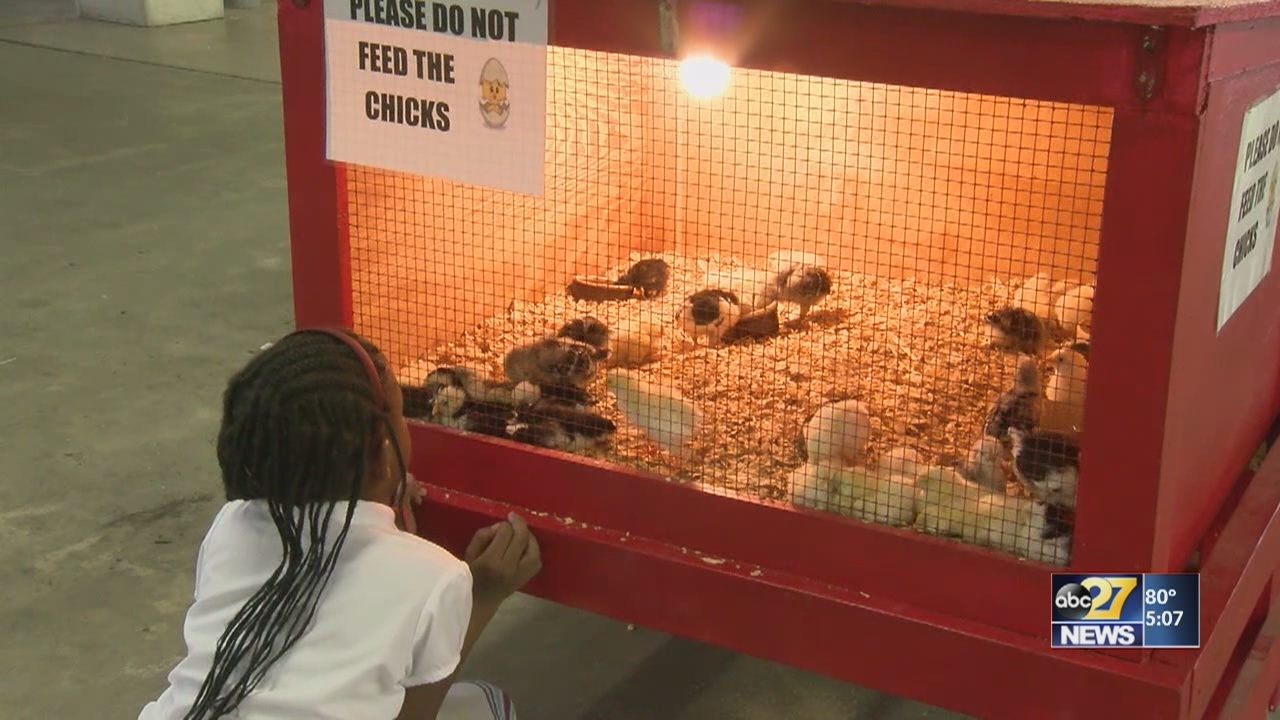 Kids learn about agriculture at York Fair
