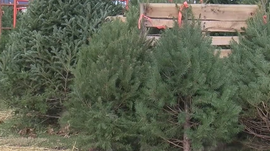 Family_sells_Christmas_trees_to_help_fam_0_64254491_ver1.0_1280_720_1544194066168.jpg