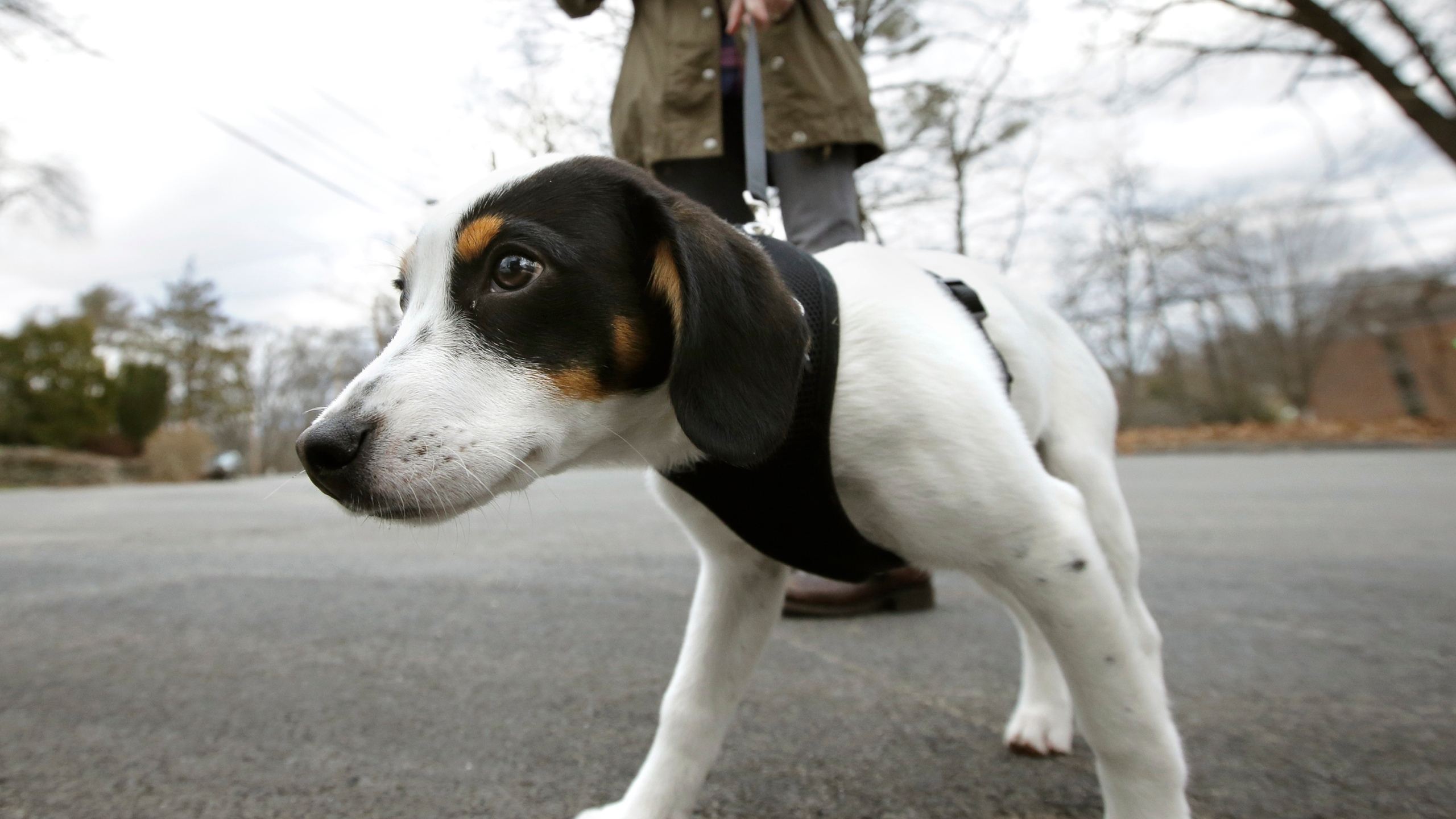 Risky Dog Walking_1551901893481