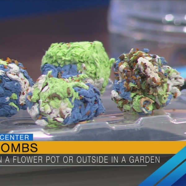 "How to make ""seed bombs"" with your children"