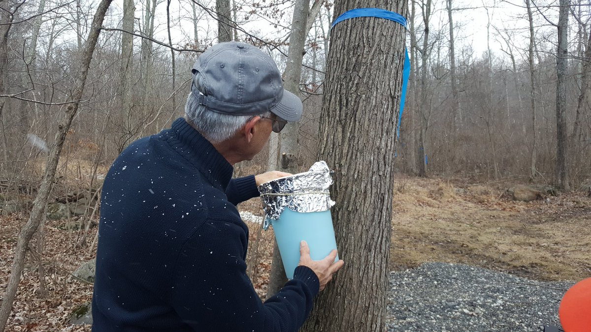 maple-syrup_485620