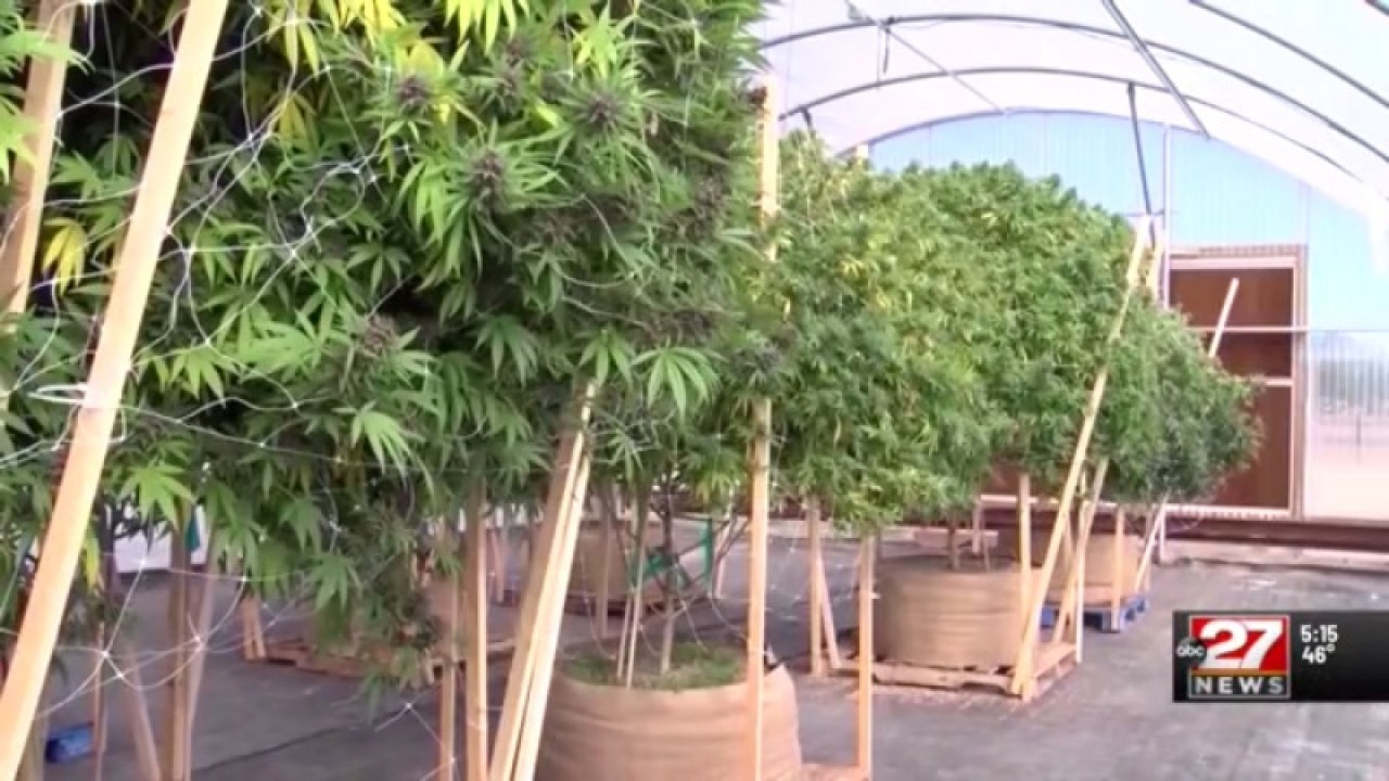 Pennsylvania bill would legalize recreational marijuana