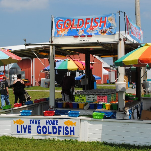 Elizabethtown Fair 2021